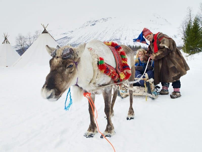 A Sami Reindeer Sledging Adventure near Tromso, Norway.