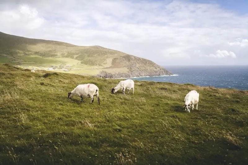 Dingle, Ireland: Forgotten Desolation