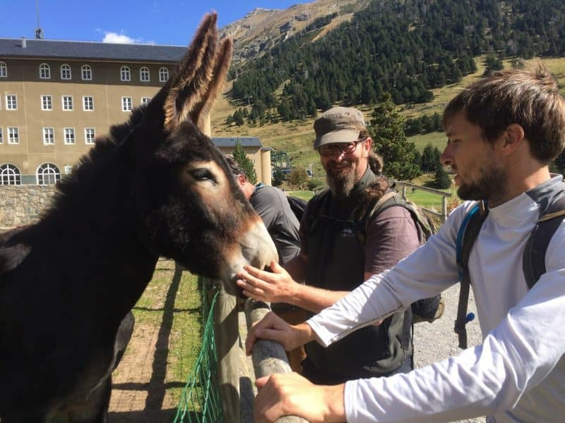 Will McGough checks out a pack mule in Val de Nuria, Spain.