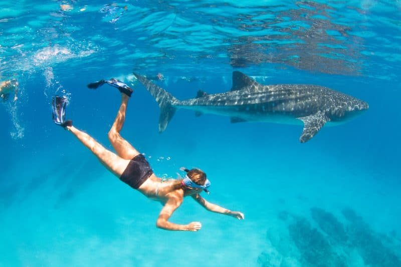 An encounter with a giant whale shark at Ningaloo Reef, Western Australia.