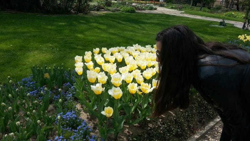 Blooming tulips at Botanic garden in Sofia, Bulgaria.