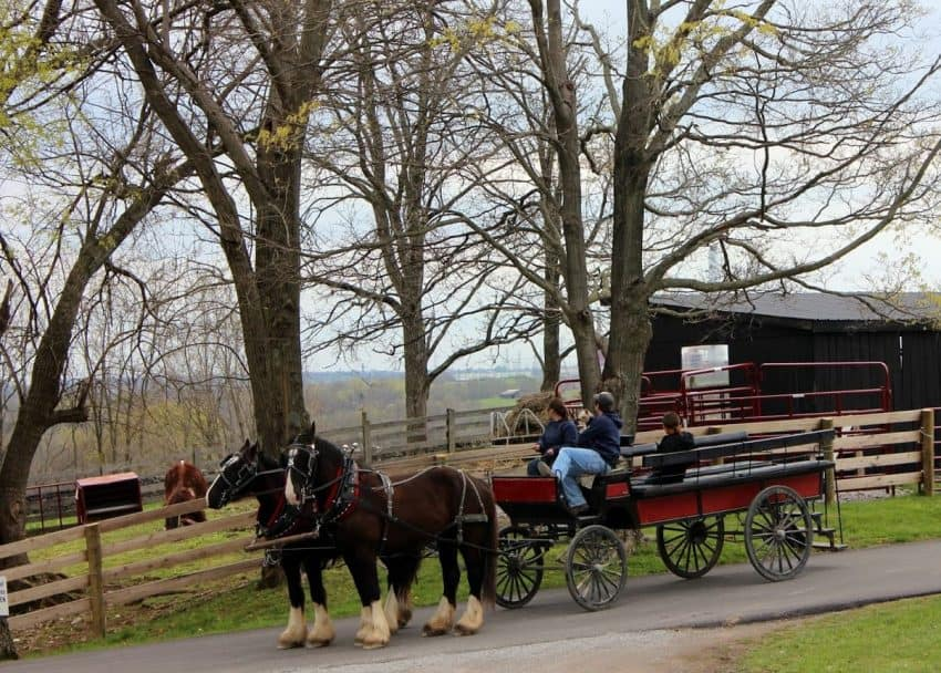 A buggy ride for visitors is part of the experience at Kentucky Shakerville.