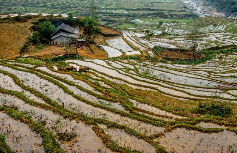 The hillsides of Sapa are layered with rice fields, a staple of the villagers' diet. Donnie Sexton photos.