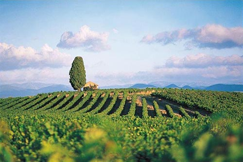 Touring France's Languedoc-Roussillon Region