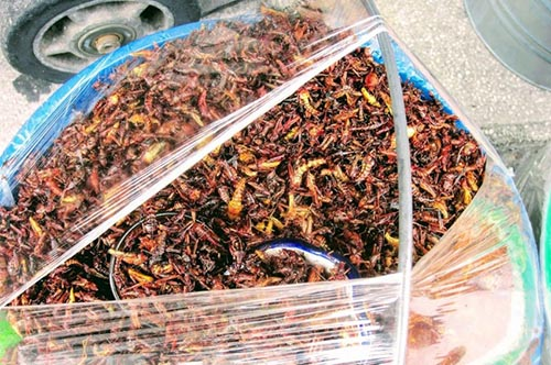 Roasted insects - centuries old Mexican protein snack
