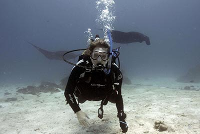 SCUBA diver swimming with rays in Hawaii. | GoNOMAD Travel