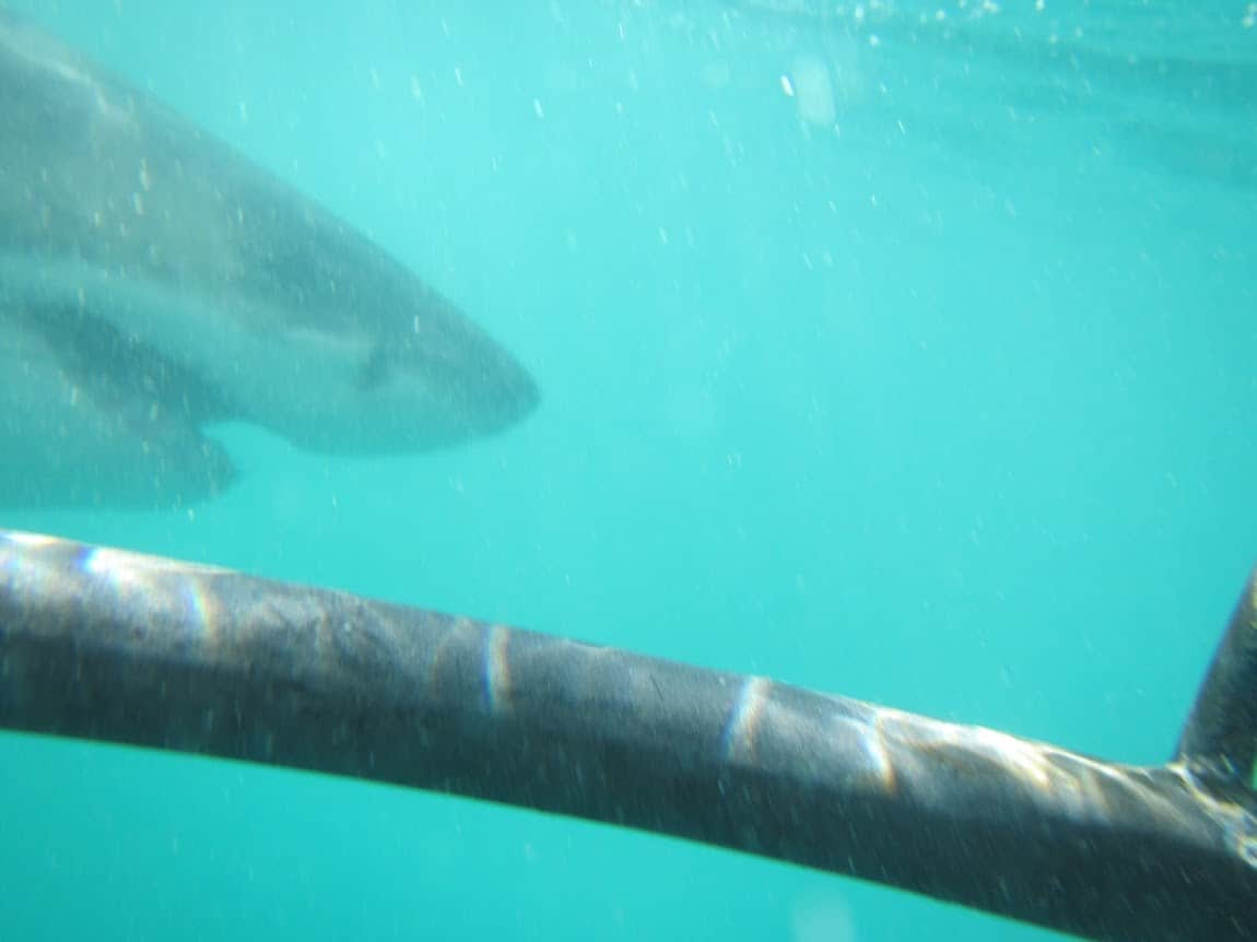 A view of a shark under water.