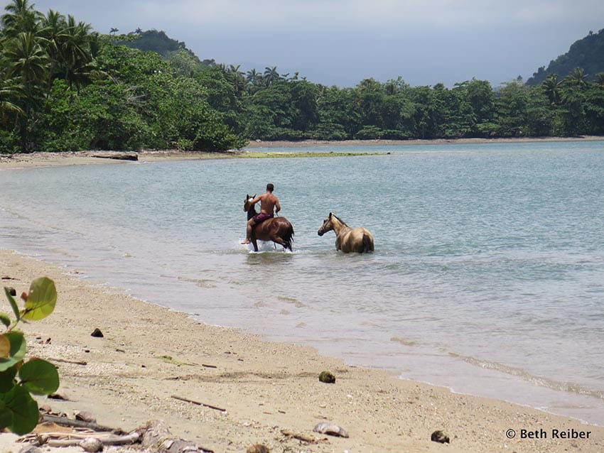 A man cools off his horses on a deserted beach