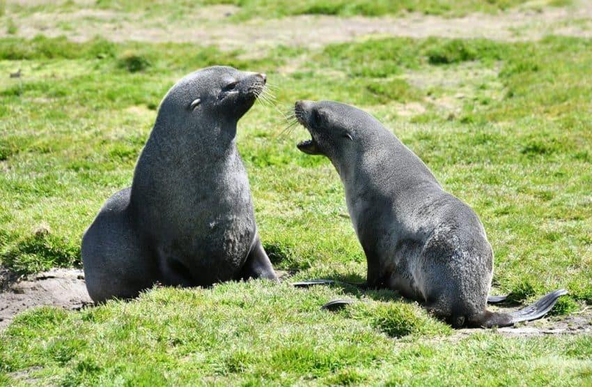 Seal pups playing around.