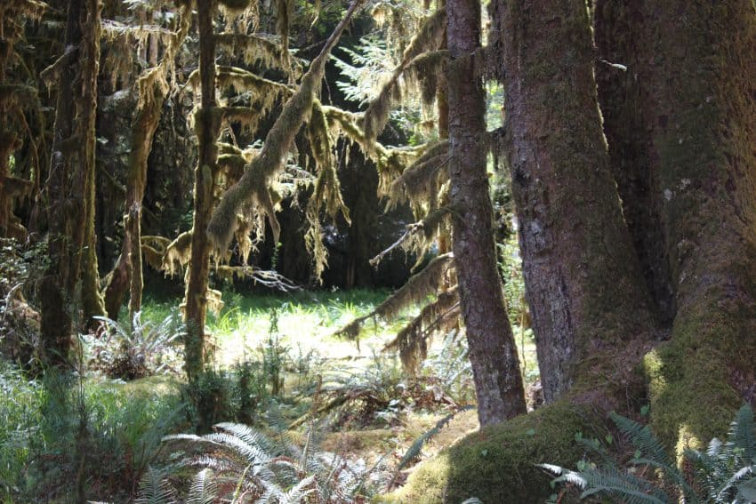 The Hoh Rain Forest, outside of Forks, Washington, offers a diverse array of different microclimates. Wynne Crombie photos.