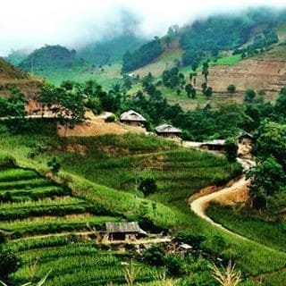 Rice paddies in terraces in Northern Vietnam.