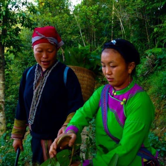 Vietnam's Highlands: Taking a Killer Trek 2