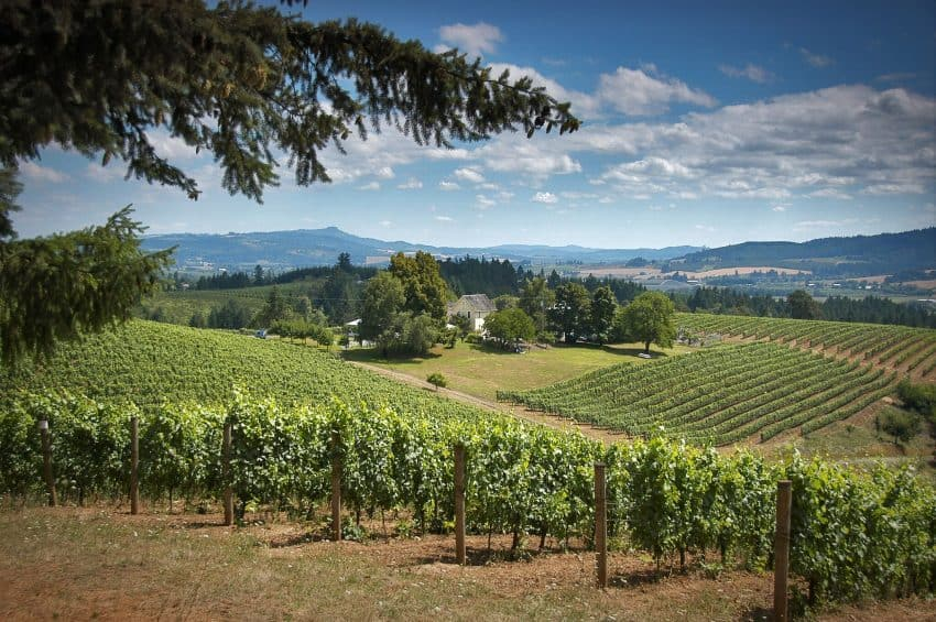David Hill Winery, in Oregon's Tualatin Valley.