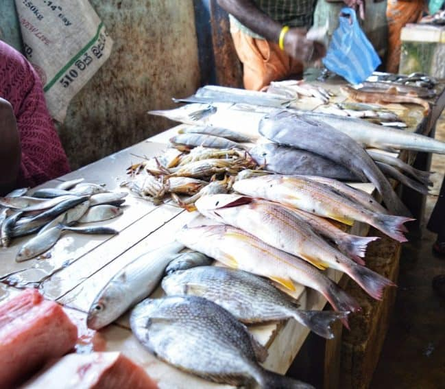 Pannai Fish Market is the main fish market in Jaffna.