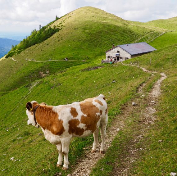 Viehscheid, the time when the cows come down the mountain in Bavaria. | GoNOMAD Travel