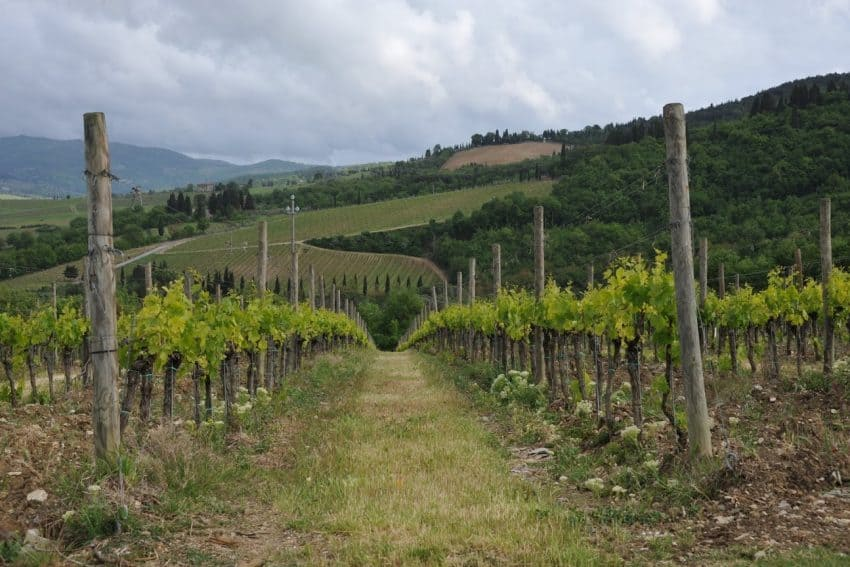 Tuscany's vineyards offer tastings, lots of history, and three-course wine-paired meals. | GoNOMAD Travel