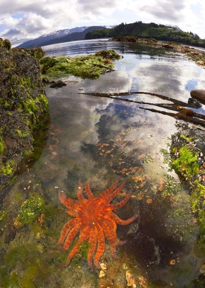 Tide pool starfish Alaska's Ridgewood Wilderness Lodge: Gateway to Adventure
