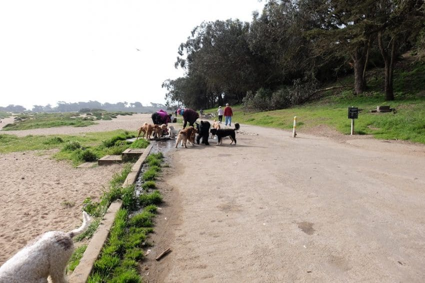 Dog Park: Stopping for a water break at Fort Funston.