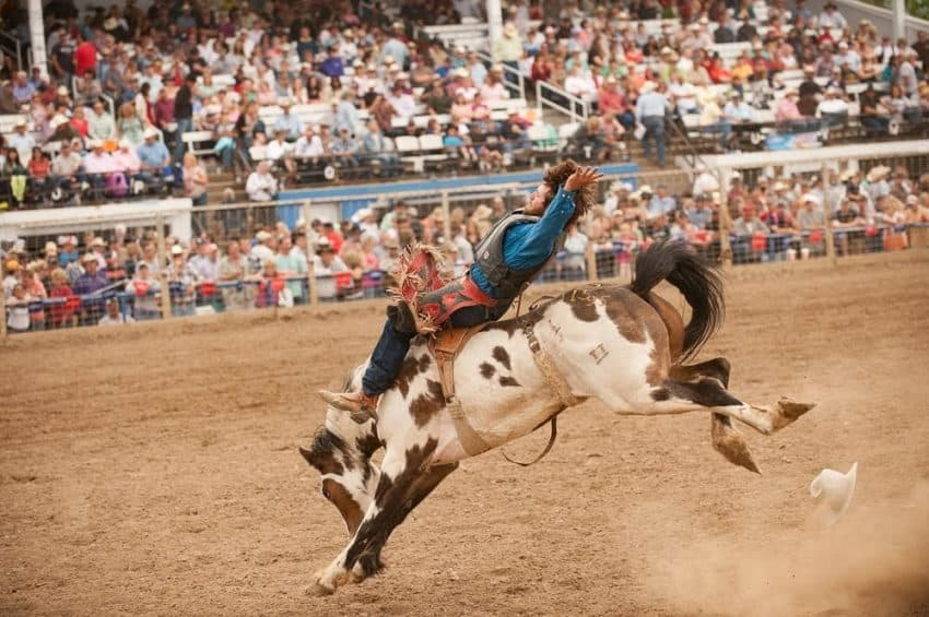 Lest you think its all about bucking horses, this arena has seen two weddings take place during the Bucking Horse Sale.