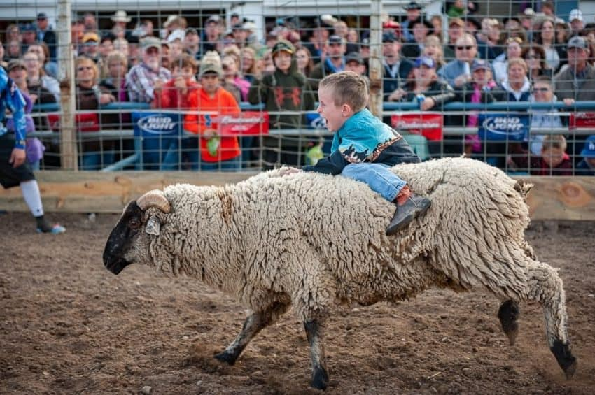 Always a crowd pleaser is the mutton bustin', where kids ages 4-6 can try their luck at riding a woolly sheep, with the winner taking home a belt buckle.