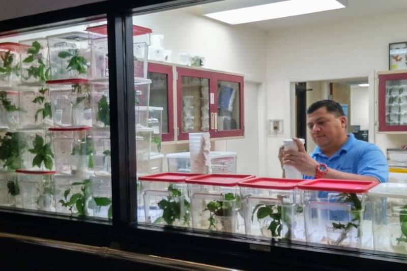 The botanical lab inside Butterfly World on Florida's Gold Coast is crucial to the mission. | GoNOMAD Travel