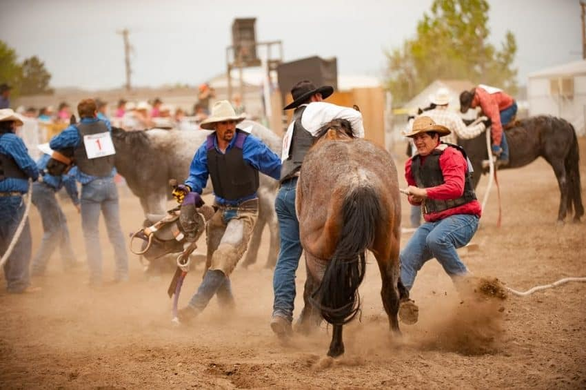 The Wild Horse Race consists of three team members, an ornery horse, a saddle and halter. The goal is to get the saddle on the horse, then have one of the team ride a full loop around the fairgrounds race track.