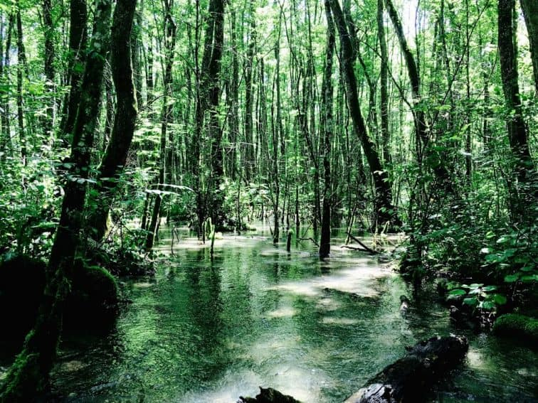 Woodland between Gex and Crozet. The waters are shallow enough to wade in, creating an eery atmosphere within the woods. There is a sense that one could walk through the water but that it remains unknown what one will find within it.