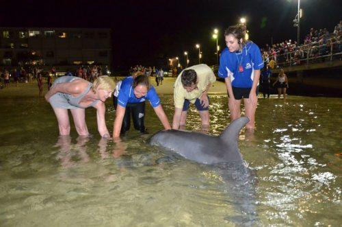 Feeding wild dolphins at Tangalooma Resort on Moreton Island