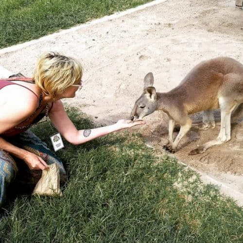 Feeding kangaroos at Lone Pine Koala Sanctuary - my life is now complete!