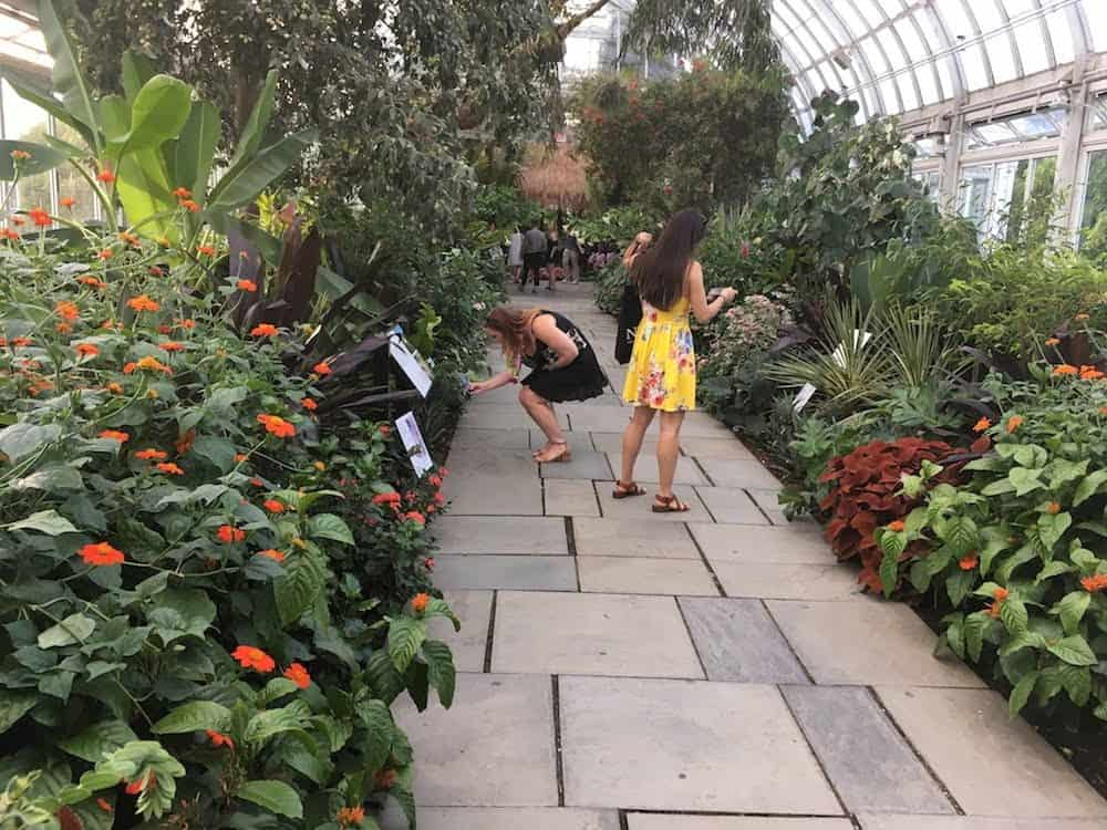 Viewing the spectacular flowers and plants in the gardens.