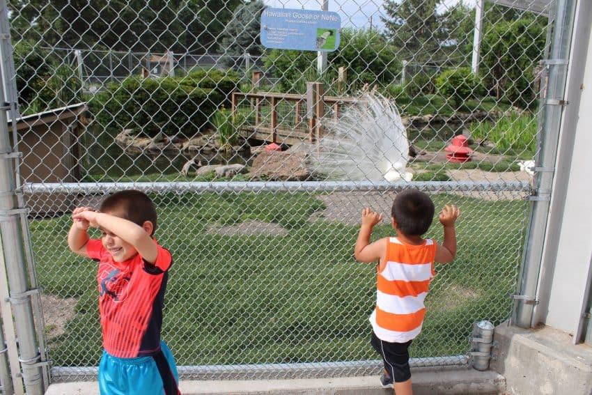 Boys checking out the white peacock at Pioneer Park Walla Walla