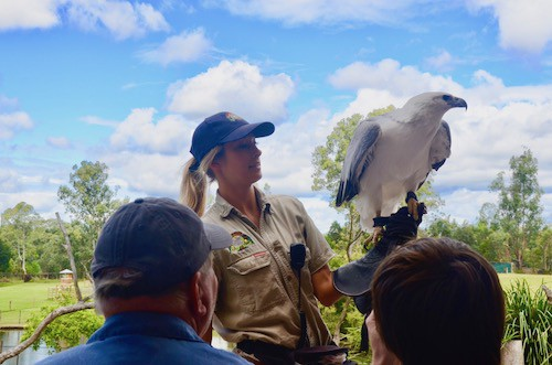 Kids absolutely loved the raptor flights at Lone Pine Koala Sanctuary