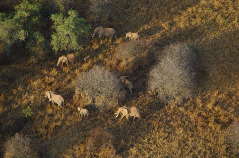 Elephants Along the Route of the Upcoming 2018 Icarus Trophy Race in Africa, Taken From a Paramotor.