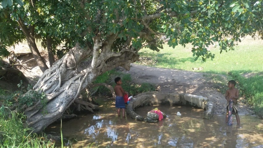 Boys doing laundry beneath a tree in Mozambique.