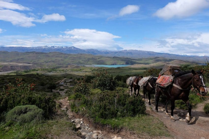 Horses walking the trail in Torres del Paine, Patagonia, Chile.
