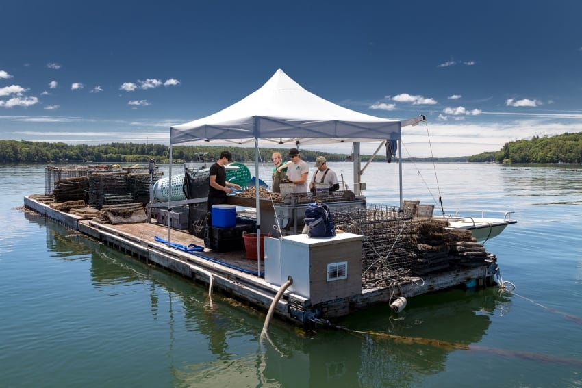 Otter Cove Oyster farm on the Damariscotta river. Maine. Paul Shoul, GoNOMAD.com