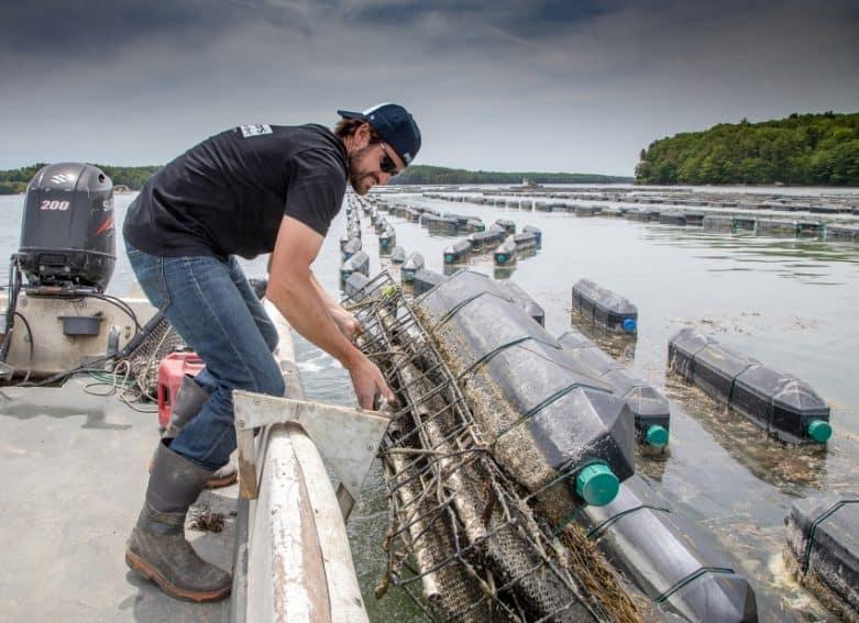 Mook Oyster Farm on the Damariscotta River, Maine.