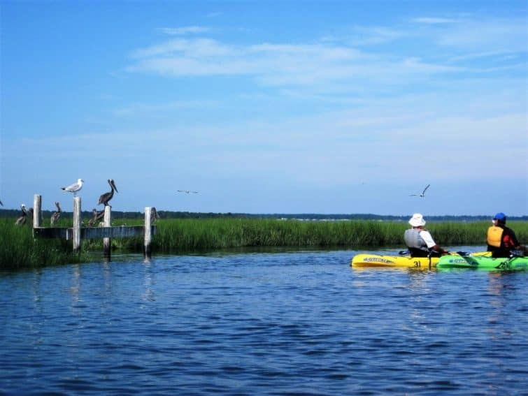 Natural habitats of Osprey and Herons on eco-tour up-close around Burton Island Natural Preserve on DE coast. Photo: DE State Park