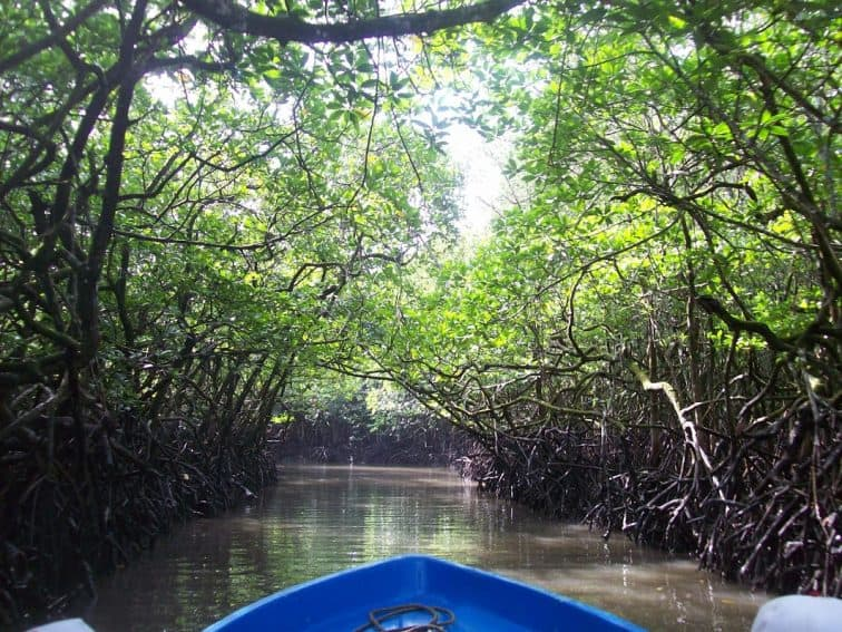 Boating through the mangroves on the Andaman Islands.