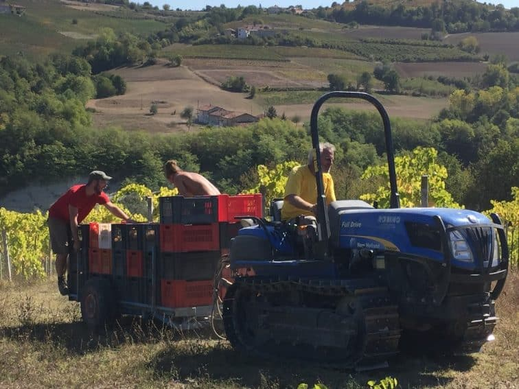 Marcello driving the tractor back at the end of the day with Flavio and Edo hitching a ride with the grapes