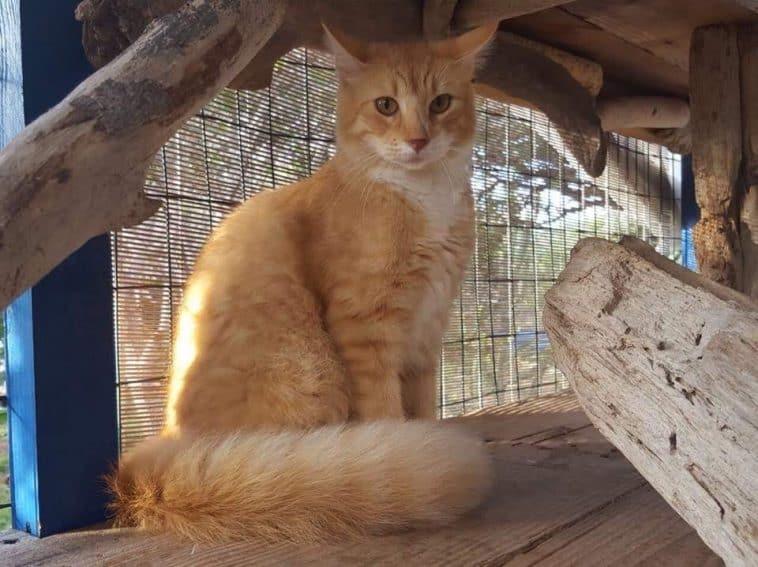Aruba: Rescuing Street Animals