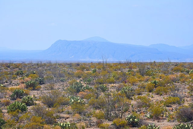 The Blue Mountains in the distance at Big Bend National Park, in Texas.