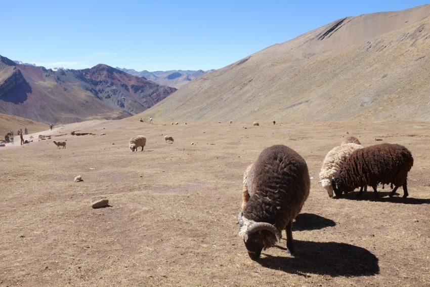 Peru: Hiking Up a Rainbow 8
