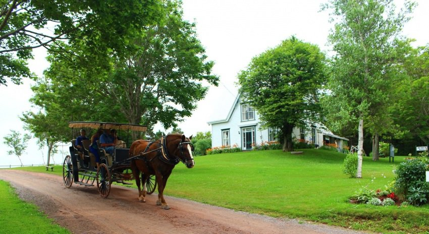 Carriage rides are popular at Anne of Green Gables Museum in Kensington.