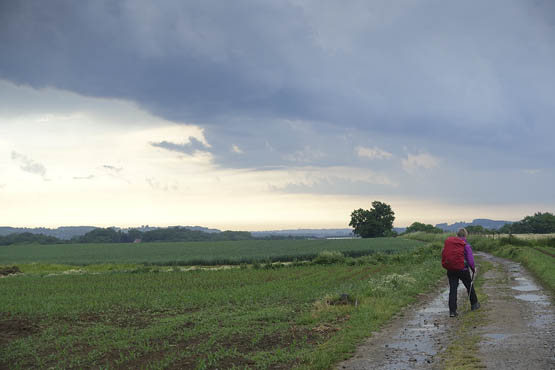 Hiking the GR5 trail across Benelux.