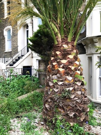 Palm trees grow all over London. Not in New York City.