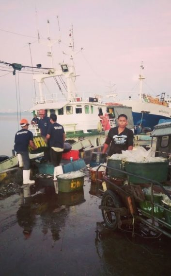 Loading law law, a local fish, in Ticao.