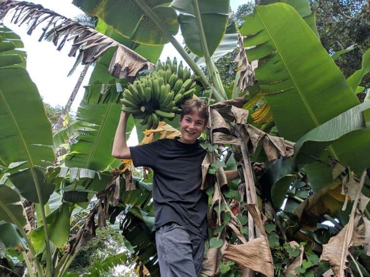 Aren Elliott harvests bananas outside our vacation rental near Hilo, Hawaii. Christopher Elliott photos.