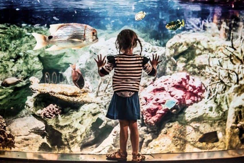 A young visitor peers into the aquarium at La Cite de la Mer.