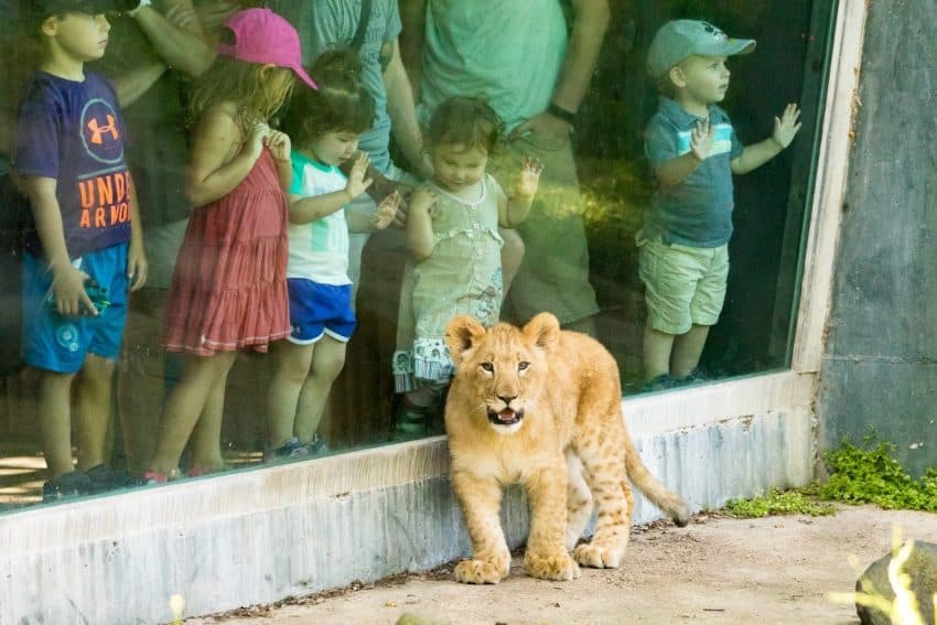 Vilas Zoo Madison.